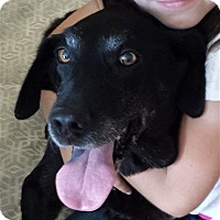 Adopt A Pet :: ALEXA - San Diego, CA