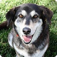 Adopt A Pet :: Star - Bellflower, CA