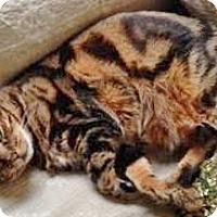 Adopt A Pet :: Duncan - Davis, CA