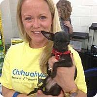 Adopt A Pet :: Amari - Puppy - Dallas, TX