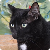 Adopt A Pet :: Elias - Englewood, FL
