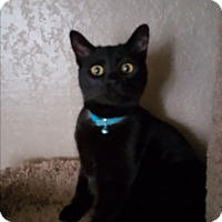Adopt A Pet :: Sheldon - Tracy, CA