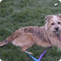 Adopt A Pet :: Copper - Boise, ID