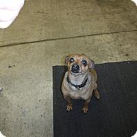 Adopt A Pet :: Peter - Sandusky, OH