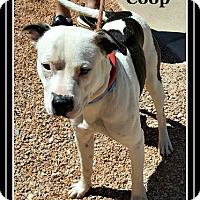 Adopt A Pet :: Coop - Tombstone, AZ