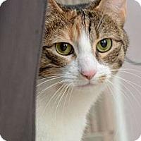 Adopt A Pet :: Hazel - Reston, VA