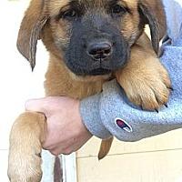 Adopt A Pet :: Noel - Fort Valley, GA
