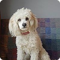 Adopt A Pet :: Henry - Milan, NY