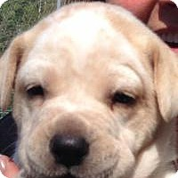 Adopt A Pet :: Tank - Marlton, NJ