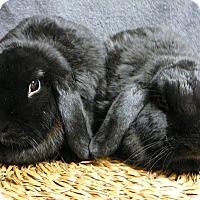 Adopt A Pet :: Ashlyn and Keryn - Newport, DE