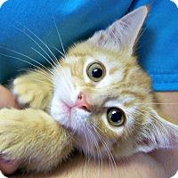 Adopt A Pet :: Rusty - Toledo, OH