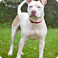 Adopt A Pet :: Powell - Fort Valley, GA