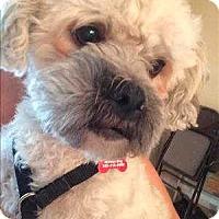 Adopt A Pet :: Marcus - Encino, CA
