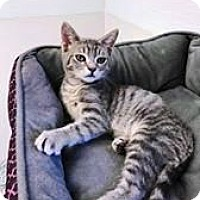 Adopt A Pet :: Tonka - PetSmart - Kalamazoo, MI