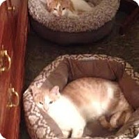 Adopt A Pet :: Duncan & Riley - COURTESY POST - Baltimore, MD