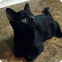 Adopt A Pet :: Cleo - Whitewater, WI