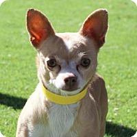 Adopt A Pet :: Petra - Colorado Springs, CO