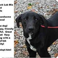 Adopt A Pet :: # 630-09 - RESCUED! - Zanesville, OH