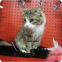 Adopt A Pet :: Anya - Sterling Hgts, MI