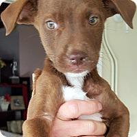 Adopt A Pet :: CHLOE AND PINEAPPLE - Winnetka, CA