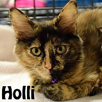 Adopt A Pet :: Holli - Las Vegas, NV