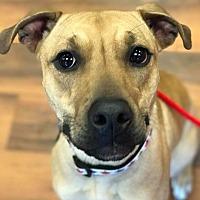 Adopt A Pet :: Lancome - Dayton, OH