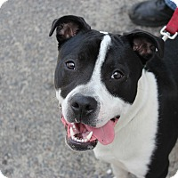 Adopt A Pet :: Ruger - North Haledon, NJ