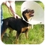 Photo 3 - Rottweiler Dog for adoption in Marion, Arkansas - BAGEL: Please Read