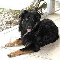 Adopt A Pet :: Cowboy - Orlando, FL