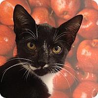 Adopt A Pet :: Lea - Albany, NY