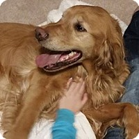 Adopt A Pet :: Codie - Greeley, CO