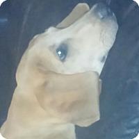 Adopt A Pet :: Copper - Oakville, CT