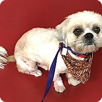Adopt A Pet :: Pilgrim - Los Angeles, CA
