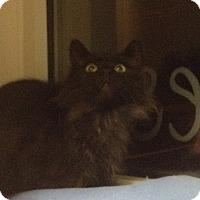 Adopt A Pet :: Hooty Hoo - Trevose, PA