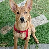 Adopt A Pet :: Balloon - Richmond, BC