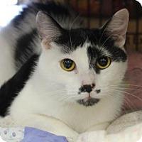 Adopt A Pet :: Lomasi - Hamilton, ON