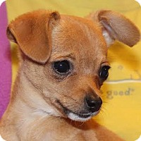 Adopt A Pet :: Xerxes - Minneapolis, MN