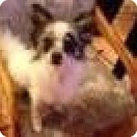 Adopt A Pet :: Rambo - Seattle, WA
