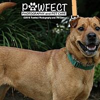 Adopt A Pet :: Sandy - Marina del Rey, CA