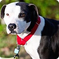 Adopt A Pet :: Andrea - Houston, TX