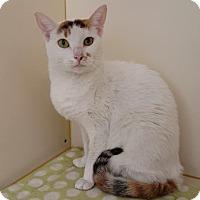 Adopt A Pet :: La Nina - Gloucester, MA