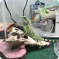 Adopt A Pet :: Scarface - Marlton, NJ