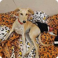 Adopt A Pet :: RUSTY TH - Tampa, FL