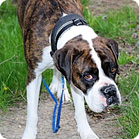 Adopt A Pet :: PRINCESS - Boise, ID