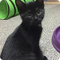 Adopt A Pet :: Benz - Wichita, KS
