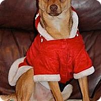 Adopt A Pet :: Wilbur