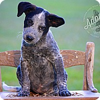 Adopt A Pet :: Twinkle - Albany, NY