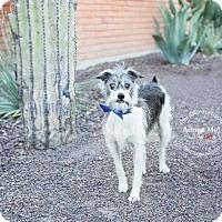 Border Terrier Mix Dog for adoption in Scottsdale, Arizona - Okie