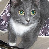 Adopt A Pet :: Bow - Richmond, VA