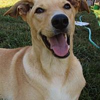 Adopt A Pet :: Bell - Melbourne, AR